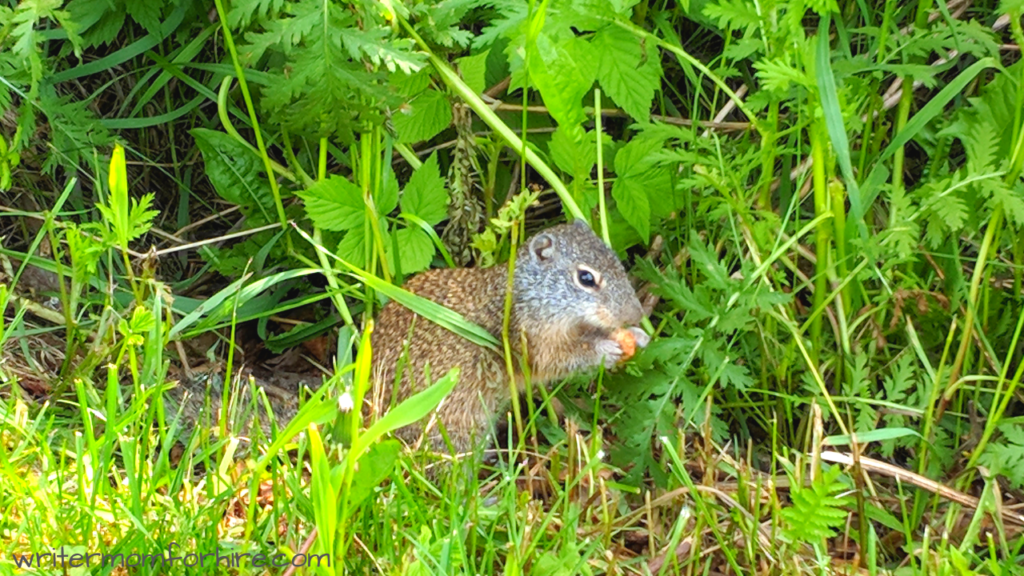 photo of a squirrel at agate bay on trip to two harbors mn