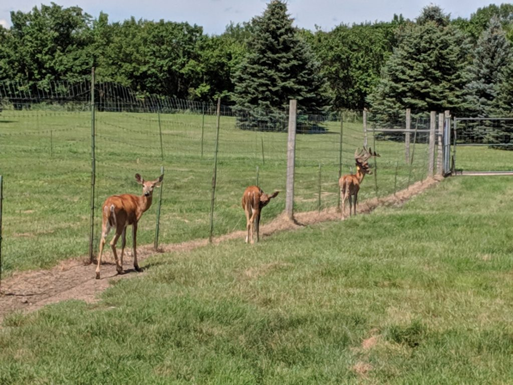 photo of the deer | storybook land aberdeen sd