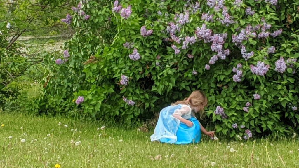 photo of my preschooler in her elsa dress picking lilacs